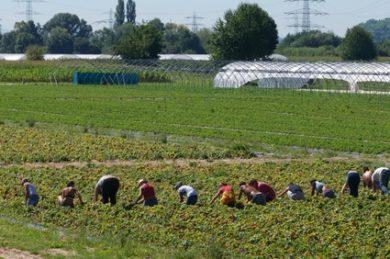 Landvolk-Präsident kritisiert Einreiseverbot für Saisonarbeiter