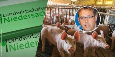 """LWK-Experte rät: """"Betriebe sollten Sauenhaltung auslaufen lassen"""""""